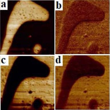 Микроскопия пьезоотклика (АСМ)